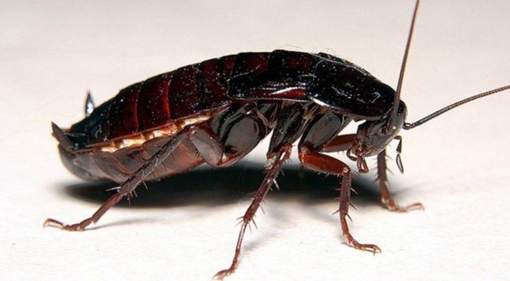 Самоконтрол над хлебарки